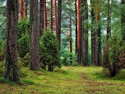 Curso Aprovechamiento de los bosques